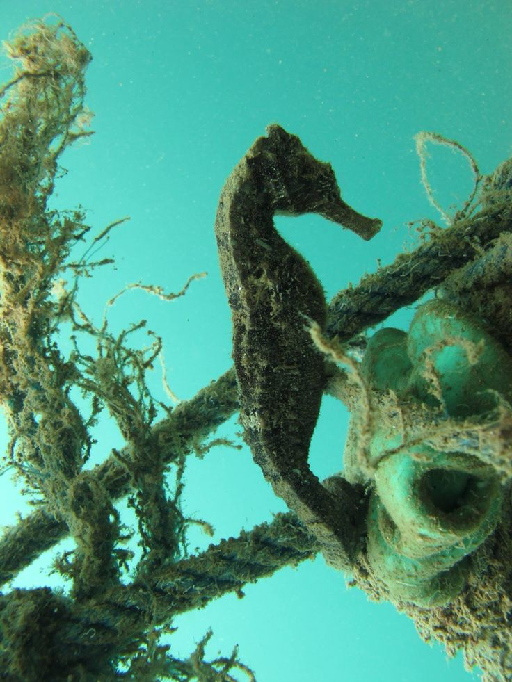 Diving around the Gili Islands in Indonesia. The Gili Islands have also macro life