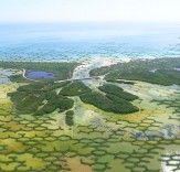 http://inhabitat.com/caltrope-modular-marine-infrastructure-reduces-agricultural-land-loss-by-helping-mangrove-forests-grow/
