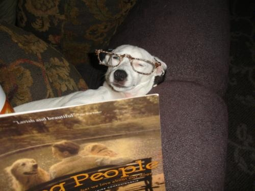 We do love to read in this family. My grand-dog killing time till it's off to the dog park....