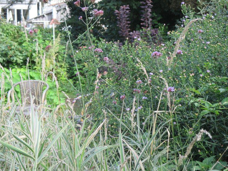 Jardin de Nathalie, graminées et verveine de Buenos Aires