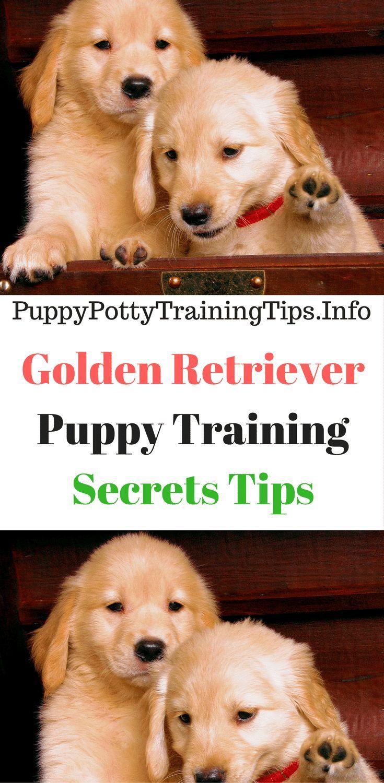Golden Retriever Puppy Training Secrets Tips I Believe That Dogs