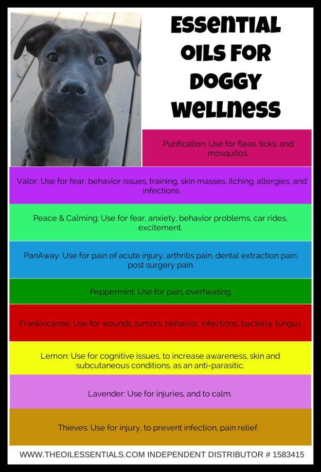 Best 25 Essential Oils Dogs Ideas On Pinterest