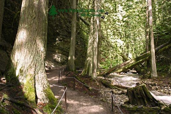 trail to Marguerite Falls, near Salmon Arm BC