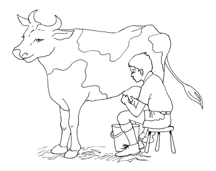 free cow coloring pages printable - Cow Coloring Page