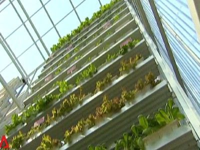 Vertical Farm Opens In Singapore, Sells Out Instantly