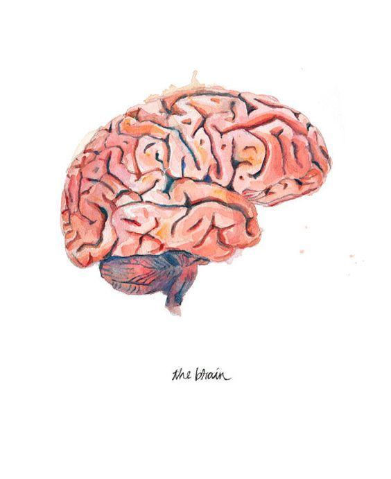 The Human Brain, Sagittal View Watercolor Print - Anatomical Brain Art - Brain…: