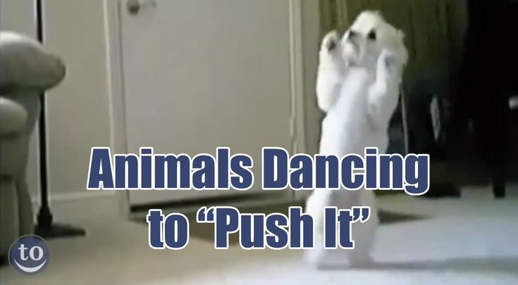 A Compilation Video of Animals Dancing to the 1987 Song 'Push It' by Salt-n-Pepa