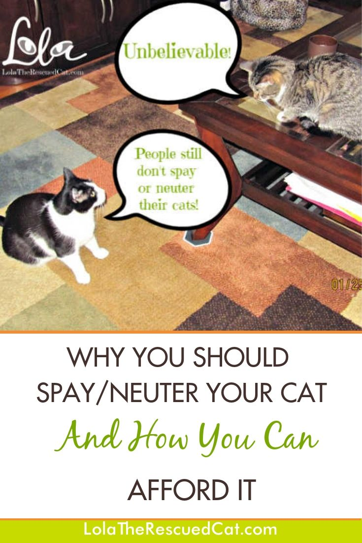 Why You Should Spay Neuter Your Cat And How You Can Afford It Cat Care Spay Big Dog Care