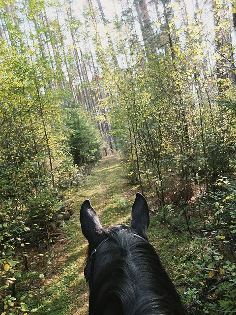 Best view of the world--through a horse's ears.