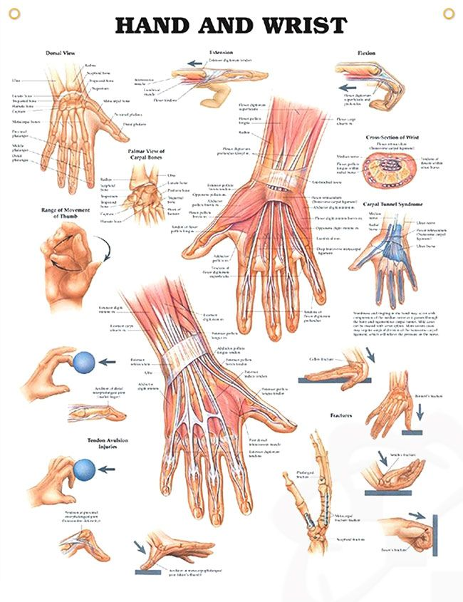 557 best Radiology- Training and Anatomy images on Pinterest   Human ...