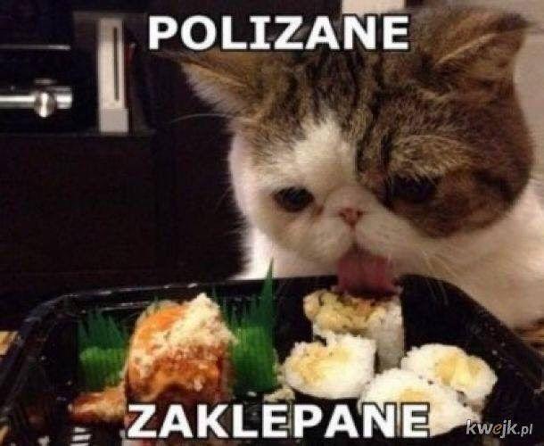 Kwejk On Instagram Cwaniaczek Kwejk Humor Cwaniaczek Jedzonko Jedzenie Zarcie Mem Memy Kot Ko Funny Animal Pictures Funny Animals Animals Images # kwejk to najlepsze memy i śmieszne obrazki w internecie. kwejk humor cwaniaczek jedzonko