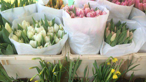 Bereits seit 1862 werden auf diesem wohl bekanntesten (schwimmenden) Blumenmarkt der Niederlande Blumen verkauft. Tauchen Sie ein in das duftende Blumenmeer in allen Farben des Regenbogens.