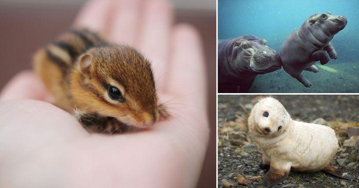 20 adorables animales bebés