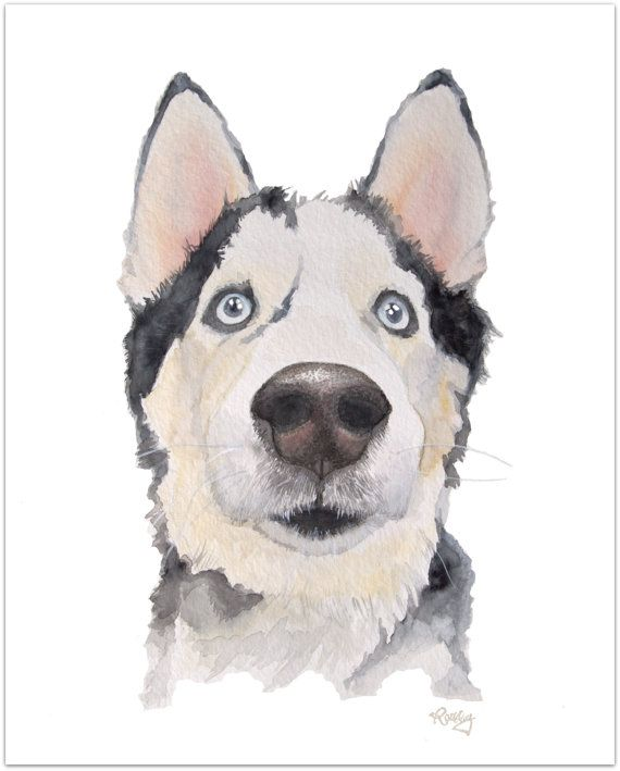 Siberian Husky watercolor print 8 x 10 by PittsburghPawPrints