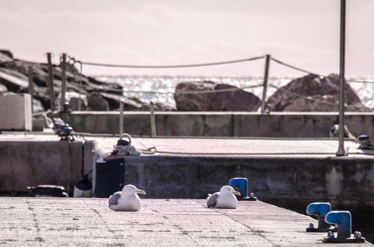 Relax di gabbiani sulla banchina #Porto libertà
