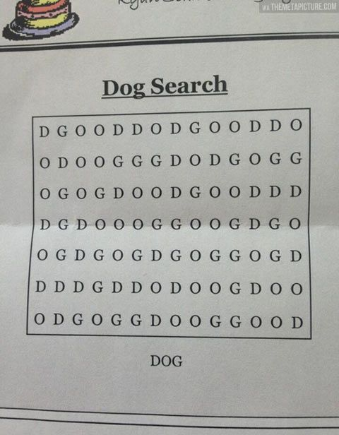 The Epic dog search! :D
