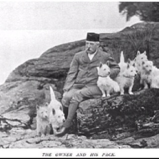 1000 images about cairn terriers on pinterest terry o 39 quinn vintage dog and west highland - Imperial westies ...