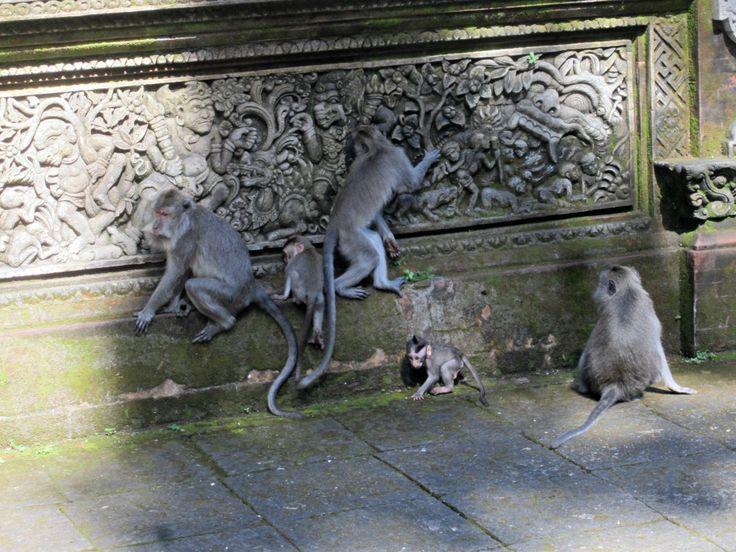 Monkey forest à Ubud Blog voyage Trace ta Route www.trace-ta-route.com http://www.trace-ta-route.com/escapade-bali/ #tracetaroute #ubud #bali #indonesie #monkeyforest #singes