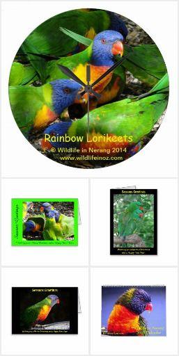 Gifts based on Rainbow Lorikeets