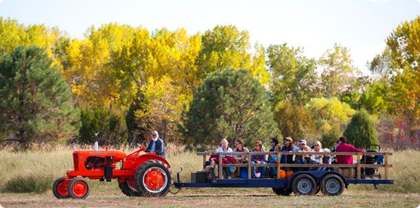 DBG Pumpkin Festival every year is a fun family trip to pick a pumpkin, hay ride, get lost in the corn maze, listen to a folky band & lots of rides activities for kids