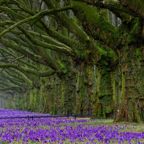 stately trees blanketed in moss.....