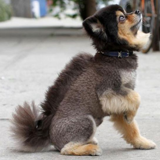 10 Dog Haircuts Gone Really Wrong