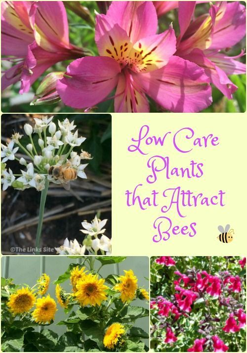 227 best the growing garden images on pinterest for Low care garden plants