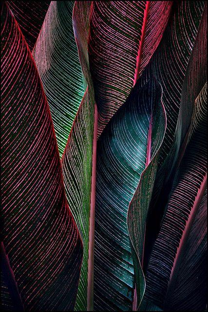 ~~backlit fronds by jody9~~