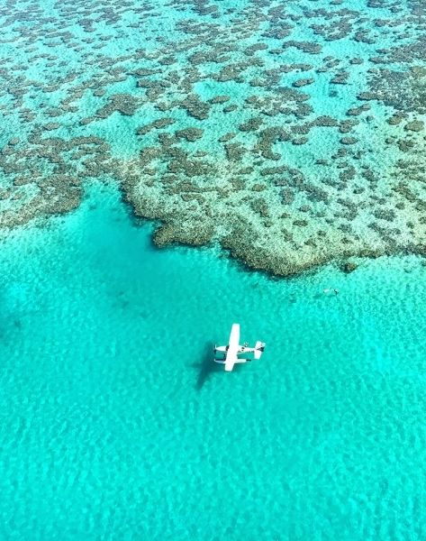 The Great Barrier Reef is seriously at risk - here's what we can do to help save the aquatic environment.