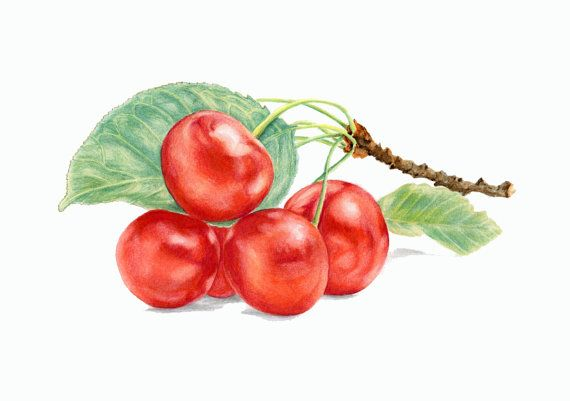 ORIGINAL Drawing - Red Cherries (Fuits Watercolors Wall Art, Summer Berrys, Still Life)