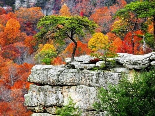 .: God Creations, States Parks, Favorite Places, Natural Beautiful, Amazing Natural, Fall Creek, Creek Fall, National Parks, Fall Trees