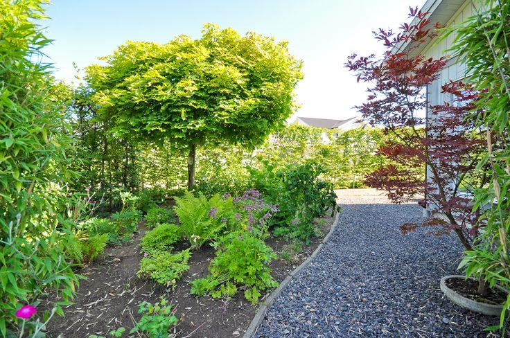 Lummig och välskött trädgård!