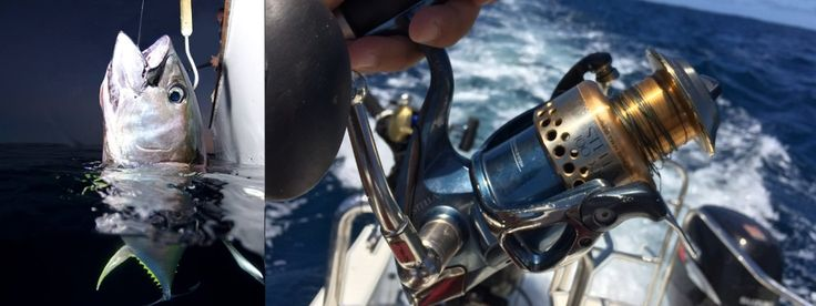 One Stripped Reel and on the other line a long fight for a sizey Tuna. #yellowfintuna #shimano www.xtremecharters.co.za