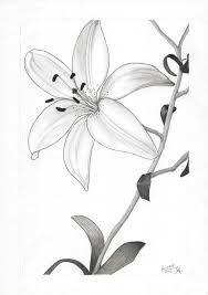 Resultado de imagen para orquidea dibujo a lapiz