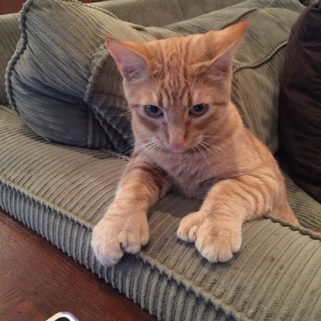 And they'd probably love to paw at you, too.   19 Polydactyl Cats Who Are Absolutely, Paws-Itively Adorable
