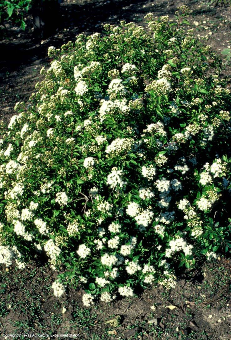 28 best ground cover plus images on pinterest ground covering