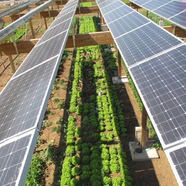 || FUN FACT || Horticulture and Agriculture seek to make the maximum use of solar energy. These include techniques like timing of planting cycles and mixing of plant varieties  #solarlab #solar #installation #solarpv #solarinstall #panels #install #quality #adelaide #SA #southaustralia #smallbusiness #business #renewableenergy #energy #batterystorage #inverter #solarcutters #sun #sunshine #weather #gosolar #makinginstallseasy #environment #safetyfirst #isolator