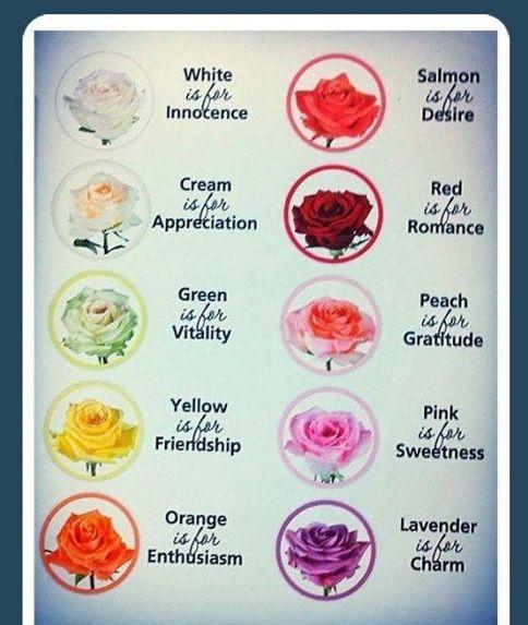 252 best images about flores de boda on pinterest - Significado de los colores de las rosas ...