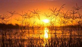 Sunset Digital Blasphemy Wallpaper HD Grass 1440x900px Resolution