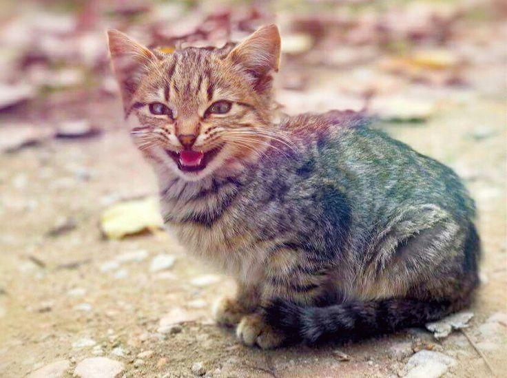 Kitten photo editing with PhotoDirector