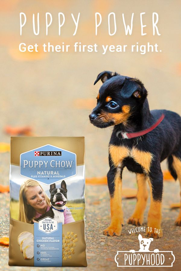Growing puppies play, run and love big. They need all the nutrients they can get - especially at this critical and developmental life stage. Make sure you're taking care of them just as much as they're taking care of you by giving them Purina Puppy Chow Natural – formulated to provide the nutrition your growing puppy needs. https://dogchow.com/en/dog-food/natural-puppy-food