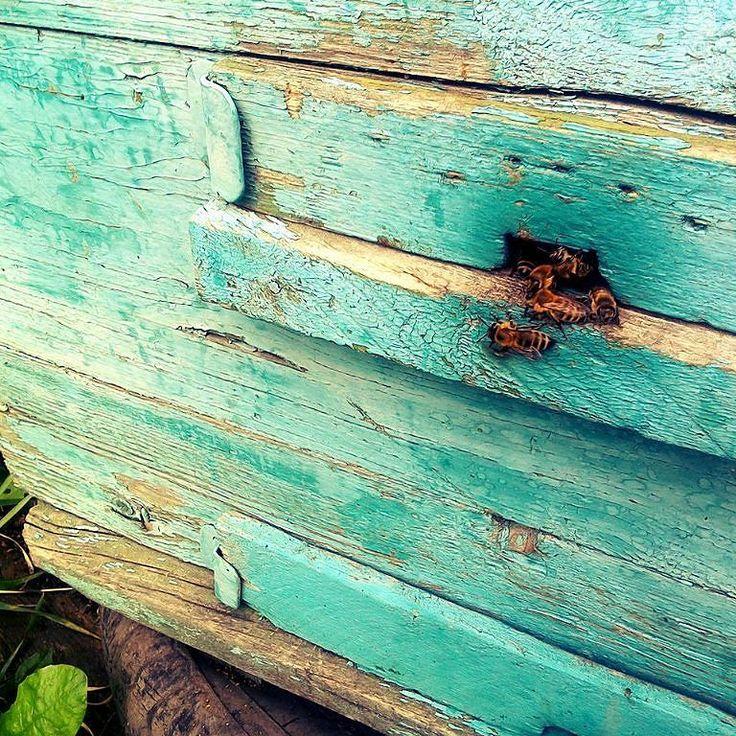 #пчелы#лето#природа#мед#красота