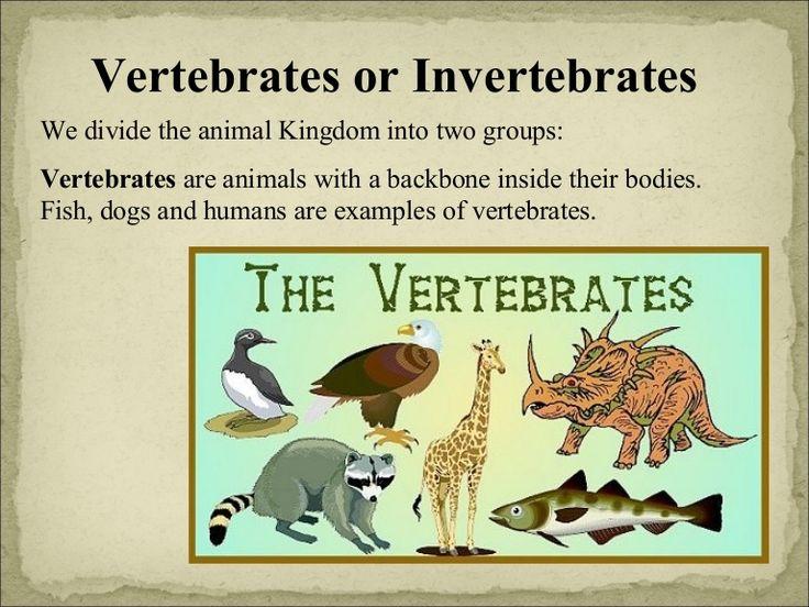 Good slide show about vertebrates and invertebrates