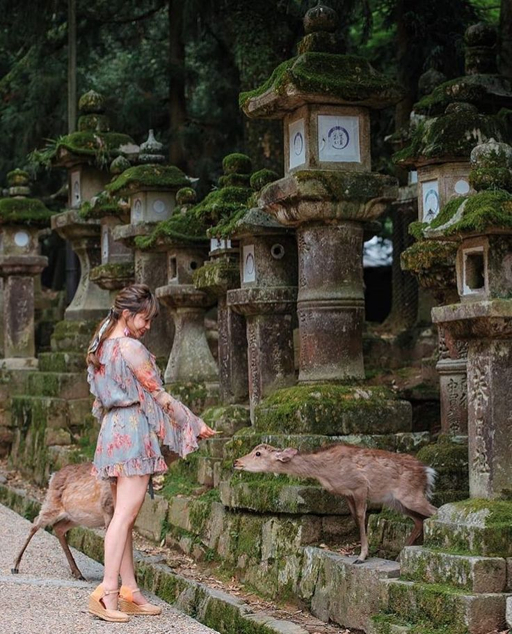 """I will have to admit I came to Nara to meet these…"