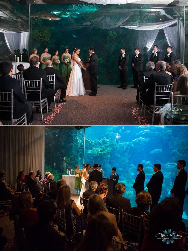 89 Best Florida Aquarium Pics Images On Pinterest