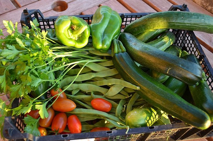 Daily harvest in July