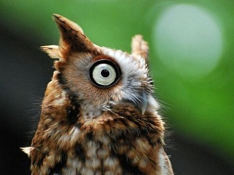 owl: National Geographic Photo, Animal Photography, Funny Animal Pics, Owl Photo, Funny Owl, Big Eye, Green Eye, Crazy Eye, North Carolina