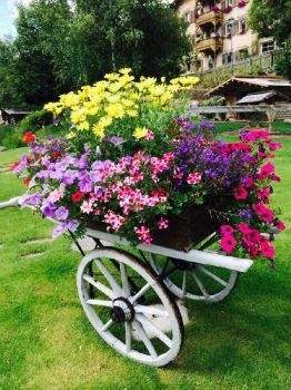 Inspiration! : Wheel barrow turned into a Garden Feature! (20 pieces)