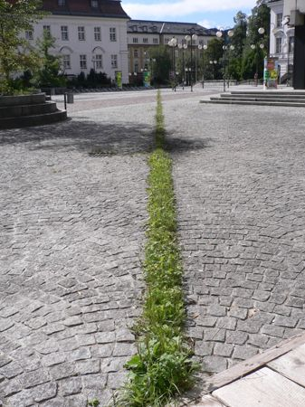 Interstitial planting in old granite set paved square in Europe