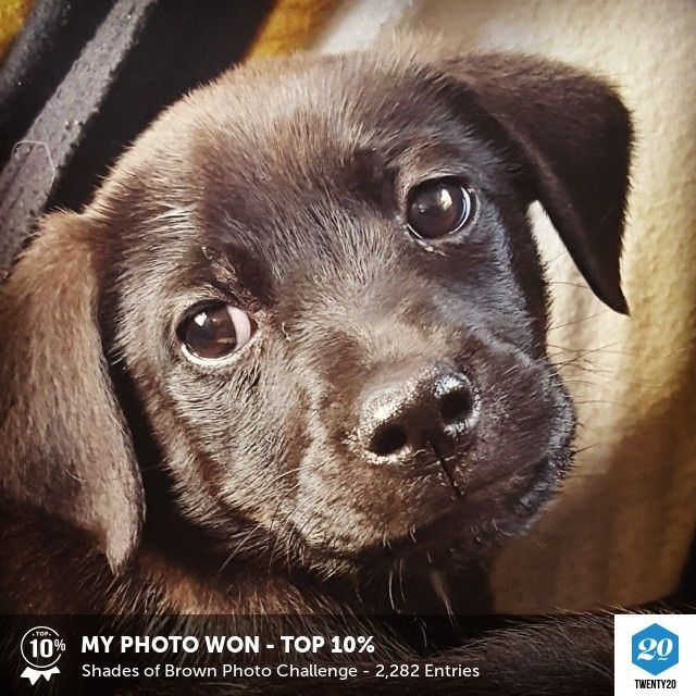 My photo was voted Top 10% in the Shades of Brown challenge on Twenty20. See the entries.